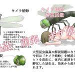 Chimera Dragonfly Analysis